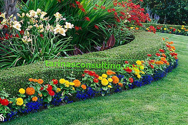 Fiori perenni piantati in primavera