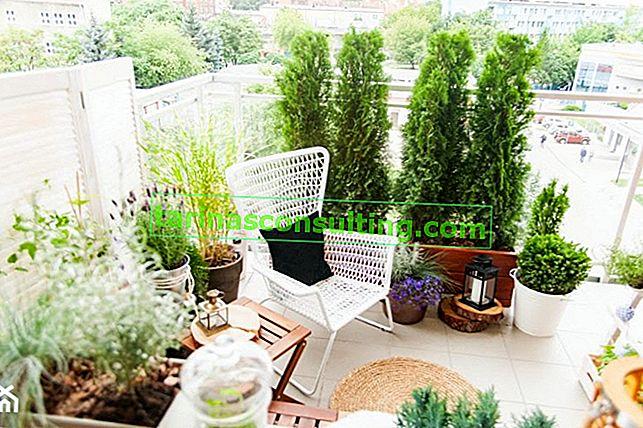 Piante per un balcone soleggiato
