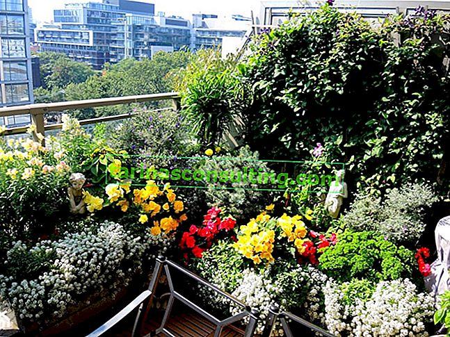 Come organizzare un giardino su un balcone in un condominio? Panoramica dell'ispirazione