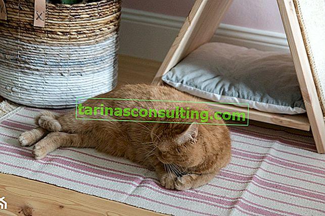Comment faire un lit avec un grattoir pour chat dans le style bohème? DIY