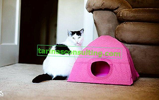 Come realizzare una tenda per gatti? Fai da te