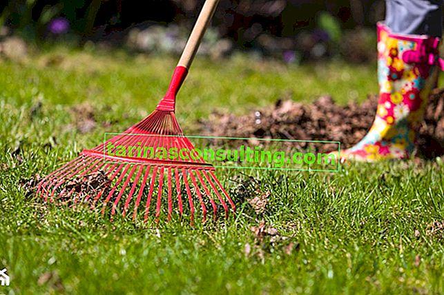 Mars dans le jardin - quels travaux de jardinage faut-il faire en mars?