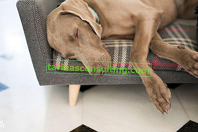 Nous choisissons le meilleur endroit pour un lit pour chien