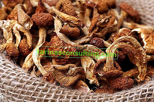 Come essiccare i funghi? Modi fatti in casa per essiccare i funghi