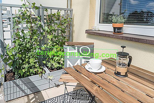 Grimpeurs pour le balcon: quelles plantes grimpantes choisir pour le balcon?