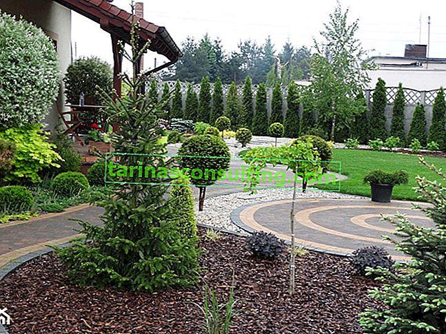 Alberi decorativi per il giardino: una panoramica delle specie alla moda
