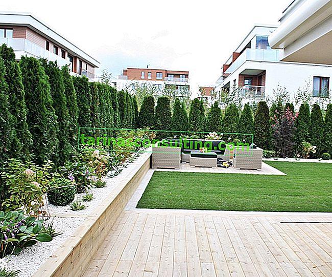 Arbusti per una siepe: una panoramica delle piante più popolari
