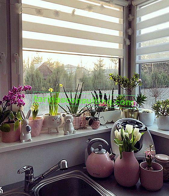 Fiori per la cucina: quali specie vegetali funzioneranno in cucina?