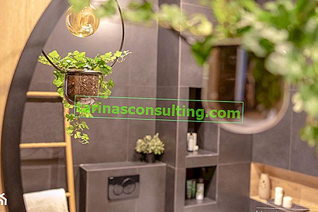 Ivy a casa: tutto ciò che riguarda la cura dell'edera in vaso