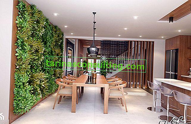 Parete verde all'interno: come e dove installare e mantenere un giardino verticale a casa?