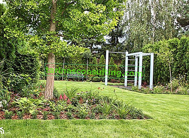 Fertiliser la pelouse - quand, quoi et comment fertiliser la pelouse?