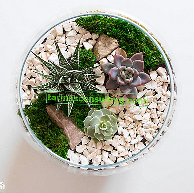 Plantes et fleurs en verre - quelles espèces travailleront dans un jardin de verre?