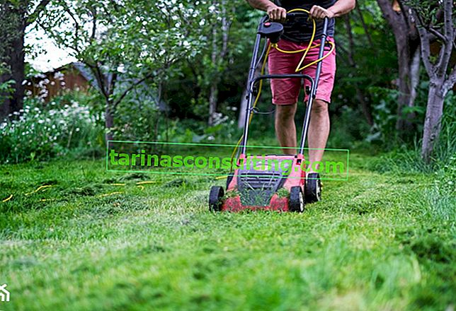 Paillage de pelouse: un guide