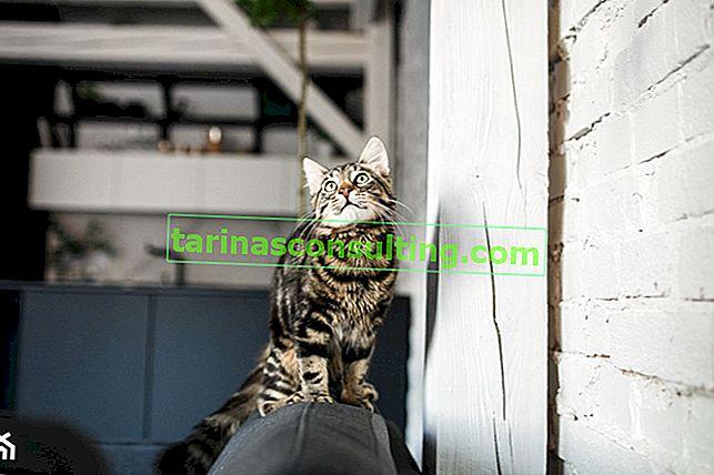 30 piante sicure per gatti