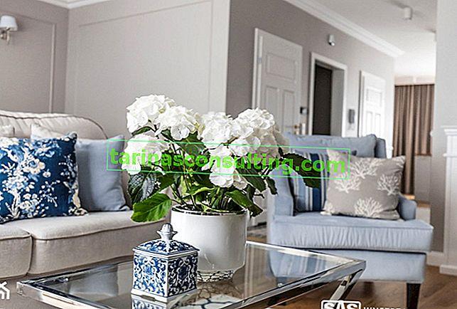 Fiori bianchi da vaso fioriti - TOP 10 delle specie più belle