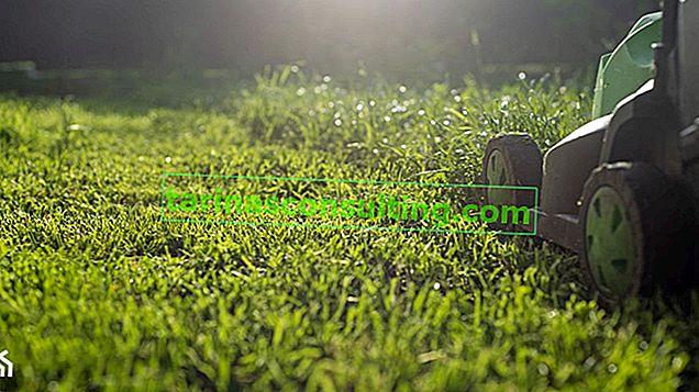 Come prendersi cura di un prato in primavera? Preparare il prato dopo l'inverno, piantare l'erba e falciare per la prima volta