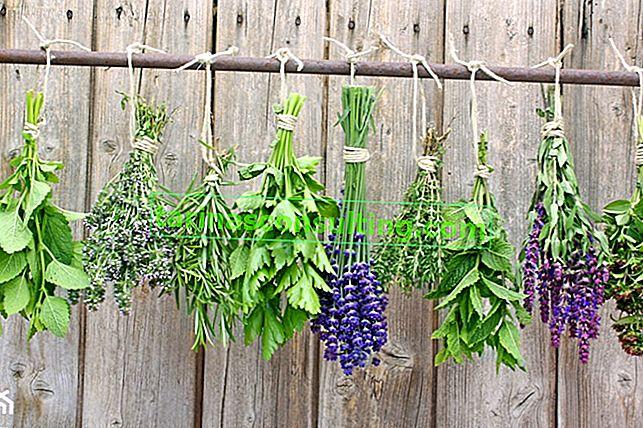 Essiccare le erbe: come asciugare le erbe a casa?