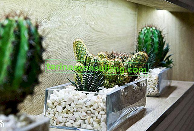 Succulente: una guida alla coltivazione di piante grasse