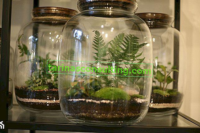 Giardino in un barattolo - cura. Come innaffiare e prendersi cura della foresta in vetro?