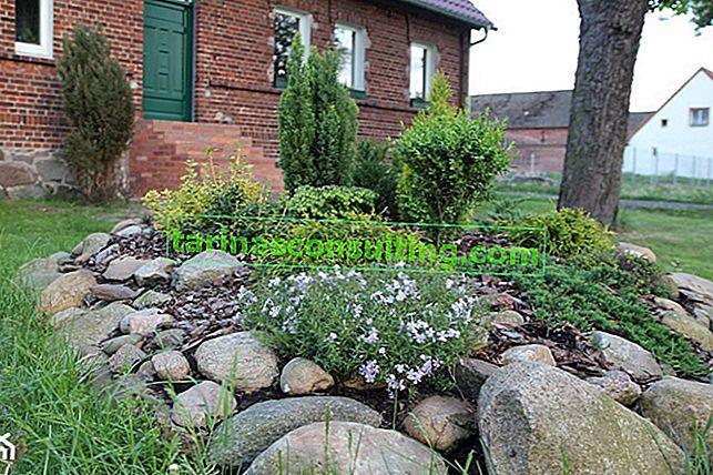 Giardino roccioso: come allestire un giardino roccioso in giardino?