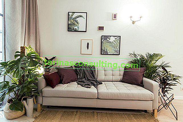 Fiori per il soggiorno - 15 piante che funzioneranno bene nel soggiorno