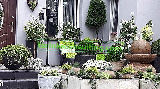 Günstige Gartentöpfe - überprüfen Sie die Topmodelle auf 25, 50 und 100 Zloty