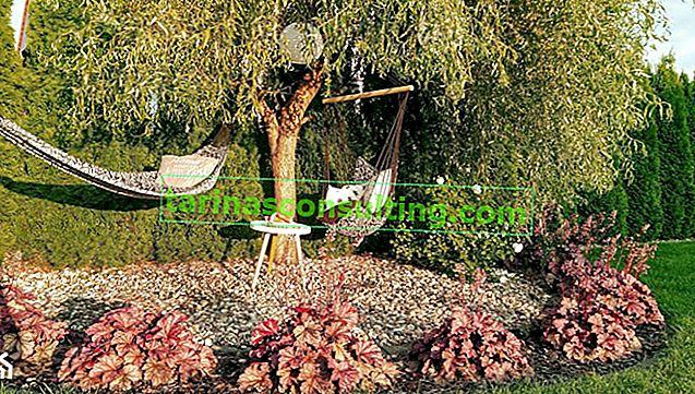 Gärtnerkalender. Welche Gartenarbeit müssen Sie im August erledigen?