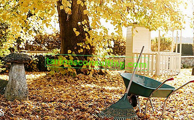 Ist das Harken der Blätter notwendig? Was tun mit den Blättern im Garten?