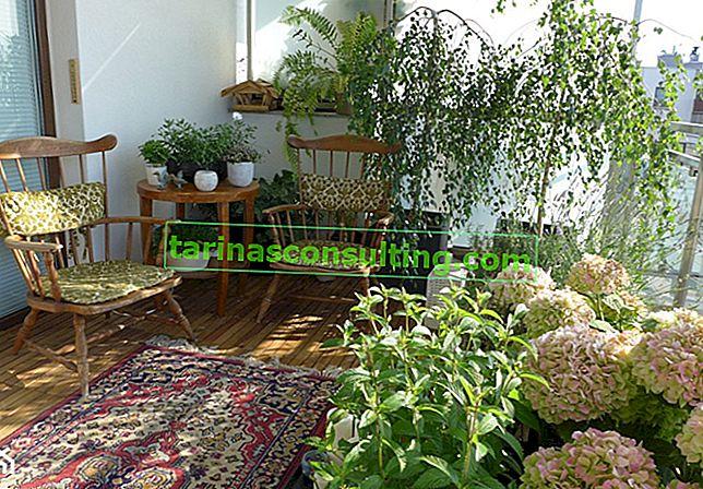 Ganzjahresblumen für den Balkon - welche mehrjährigen Pflanzen sollten Sie für Ihren Balkon wählen?