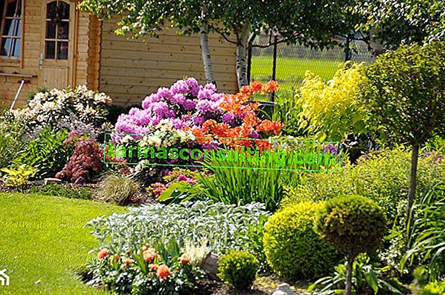 Welche Blumen für den Garten wählen? Übersicht der schönsten Arten