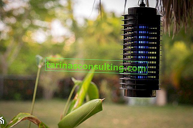 Insektenvernichtungslampe - Wir beantworten die 8 häufigsten Fragen zu Insektenlampen
