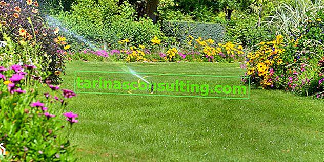 Bewässerung des Gartens - 8 Möglichkeiten, Ihren Garten sparsam zu bewässern