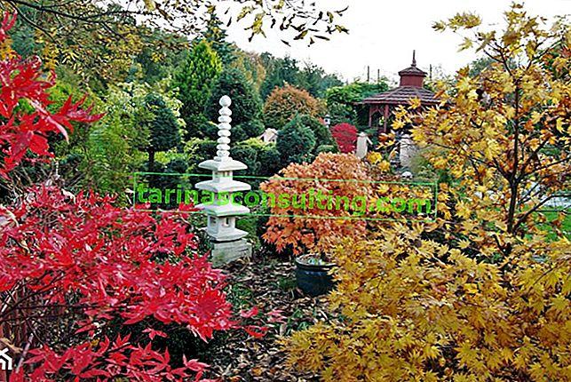 Herbstgarten. Wie schützt man Pflanzen für den Winter?