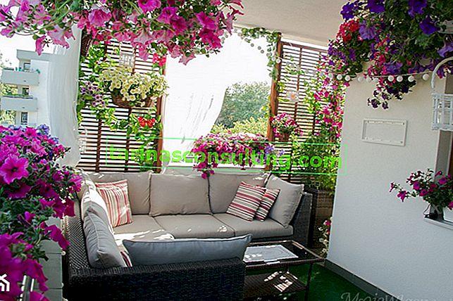 Welche Blumen für den Balkon wählen? Diese Pflanzen funktionieren am besten