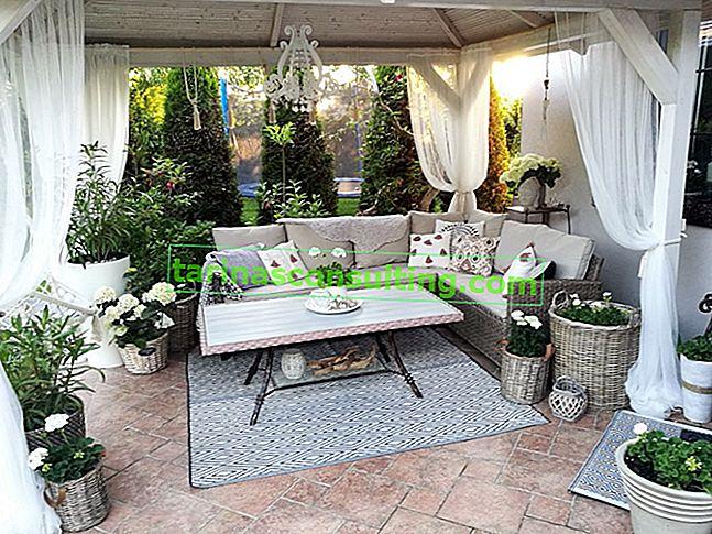 Blumen für die Terrasse - welche Blumen für die Terrasse wirken in der Sonne und im Schatten?