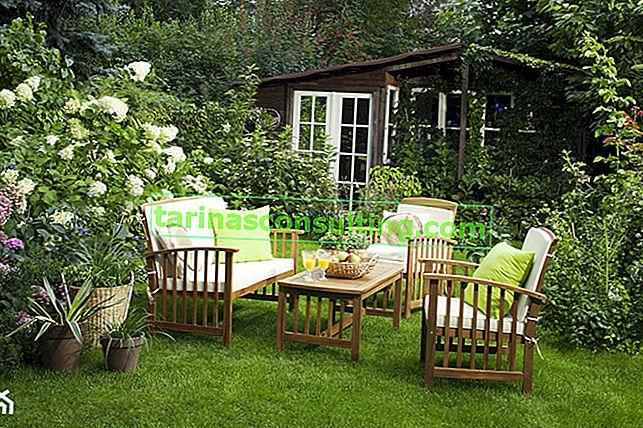 Topfblumen für den Garten - TOP 10 Lieblingsarten der Herausgeber von Homebook.pl
