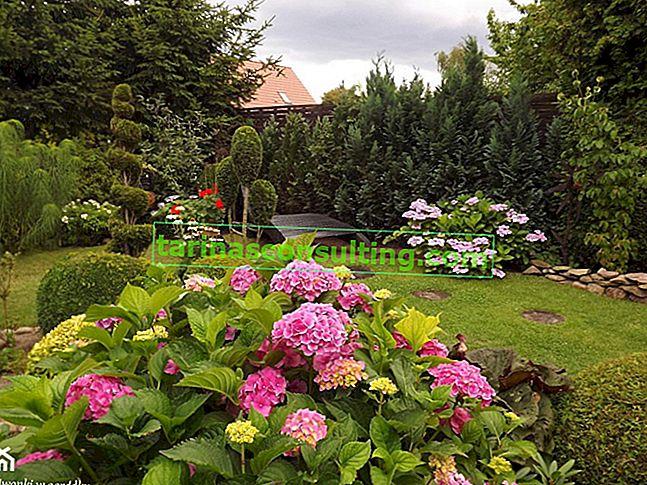 Mehrjährige Ziersträucher - welche für den Garten?
