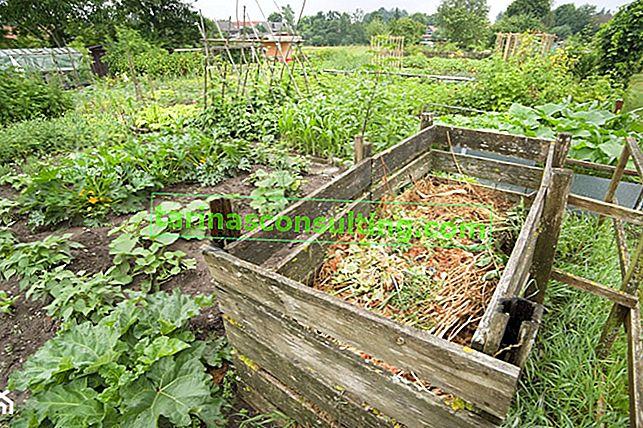 Komposter - Was sollten Sie über Kompostierung im Garten wissen?