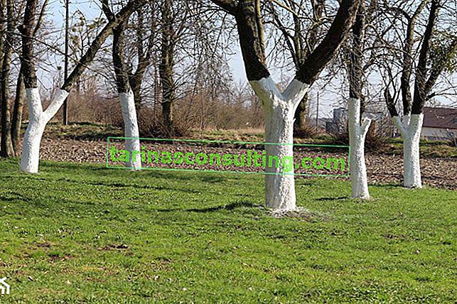 Baumaufhellung - wie und wann Bäume aufhellen? Wir beantworten 4 wichtige Fragen